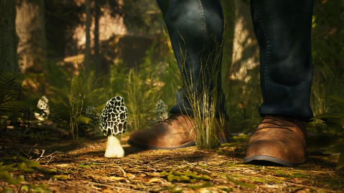 Morels The Hunt Spring Torrent Download